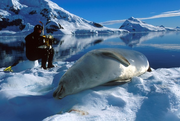 Diver and a seal in the Arctic