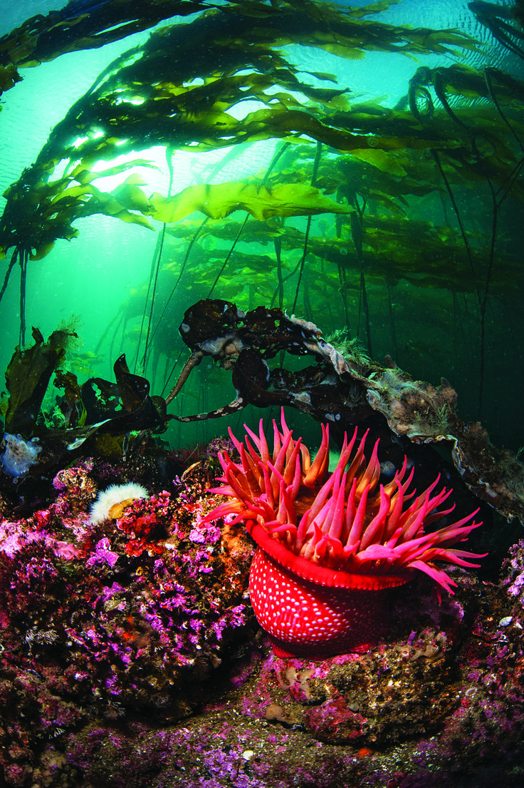Dive in Atlantic water where colorful plants grow.